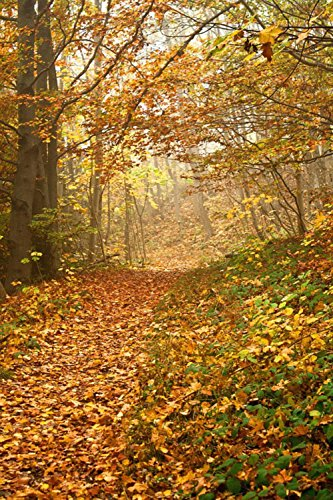 Gifts Delight Laminated 24x36 inches Poster: Autumn Forest Fall Foliage Colorful Way Path Trail Misty Nature Trees Season Outdoor Yellow Golden Wood Environment Orange Leaves Scenery