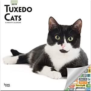 Tuxedo - Calendario 2019 para gatos - Deluxe 2019 - Calendario de pared con más de 100 pegatinas de calendario (gatos de lujo, regalos, suministros de oficina): Amazon.es: Oficina y papelería