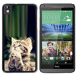 Qstar Arte & diseño plástico duro Fundas Cover Cubre Hard Case Cover para HTC DESIRE 816 ( Cute Praying Kitten God Christian Sweet)