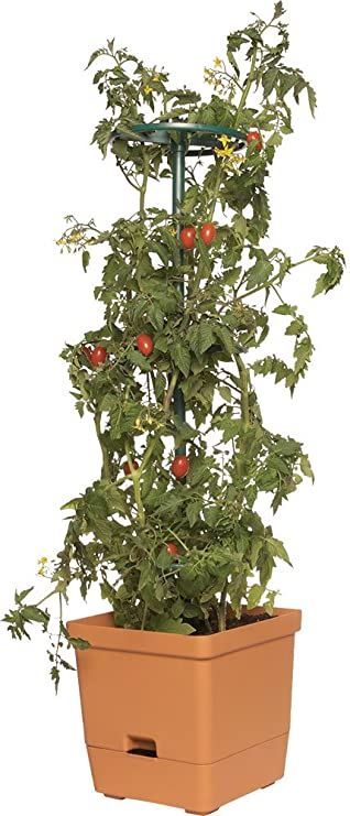 Hydrofarm GCTT Torre para Tomate de 1 m: Amazon.es: Jardín