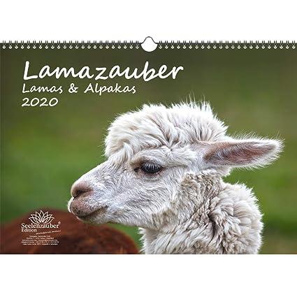 Lamazauber - Calendario 2020, DIN A3, Lama Alpaka y además 1 ...