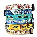 baby van gogh world of colors - Buttonsmith Art Dog Collar - Fadeproof Permanently Bonded Printing, Military Grade Rustproof Buckle, Resistant to Odors & Mildew, Choice of 6 Sizes, Made in The USA