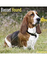 Basset Hound Calendar 2019