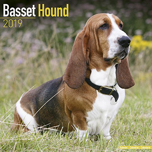 Basset Hound Calendar - Dog Breed Calendars - 2018 - 2019 Wall Calendars - 16 Month by Avonside