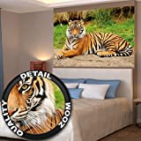Great Art Tiger Photo Wall Paper Majestic Tiger Mural Ideal for Living Room 55 Inch x 39.4 Inch