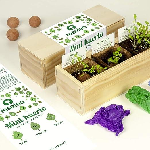 Minihuerto de hierbas aromáticas: Amazon.es: Jardín