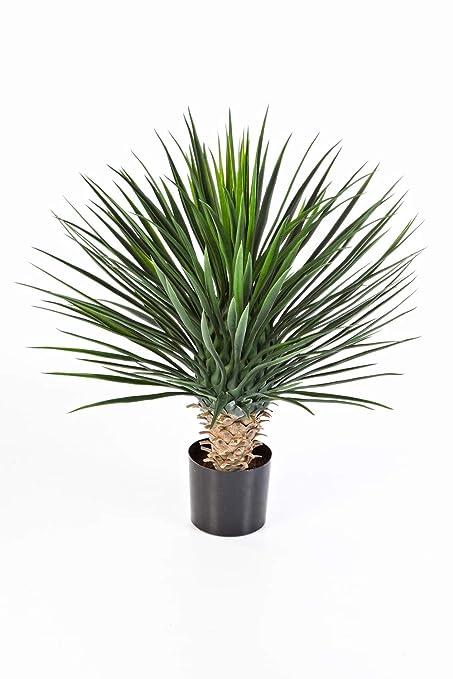 Piante Da Appartamento Amazon.Artplants De Yucca Rostrata Artificiale 176 Foglie Deluxe 80cm