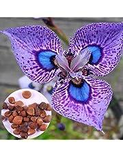 Ncient 50 Semi Sementi di Orchidee Phalaenopsis Semi di Fiori di Orchidea Farfalla Semi Fiori Rari Profumati Piante per Orto Giardino Balcone Interni ed Esterni