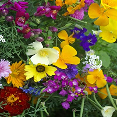 Outsidepride Balcony Wild Flower Seed Mix - 5000 Seeds: Garden & Outdoor