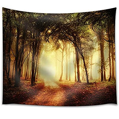 Charming Portrait, Premium Creation, Path Leading to a Forest That is Illuminated by The Sun