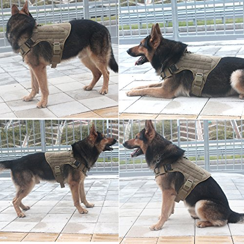 Buy walking harness for dogs