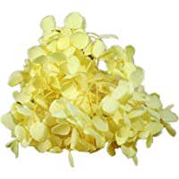 Natural Dried Flowers Real Flower Pressed Hydrangea Flower Scrapbooking Embellishments for DIY Resin Ornament Crafts…