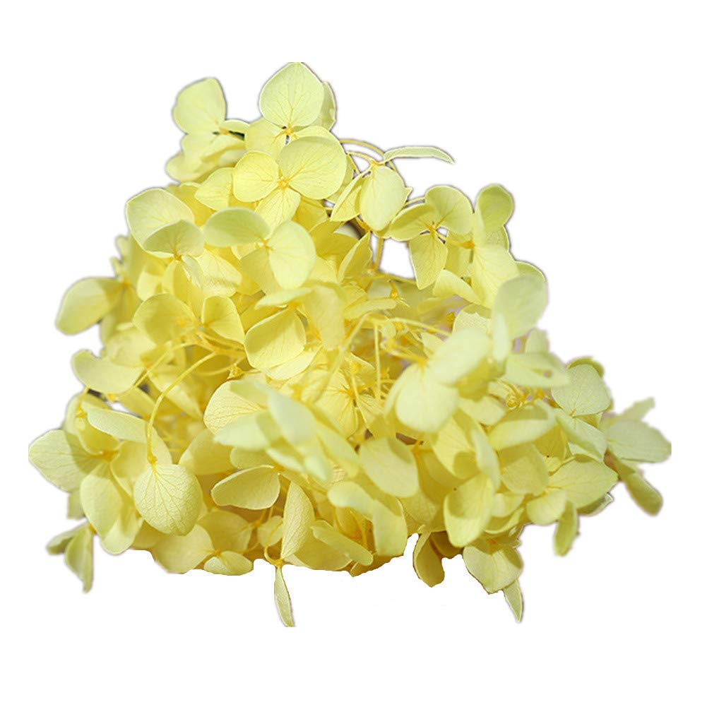 Natural Dried Flowers Real Flower Pressed Hydrangea Flower Scrapbooking Embellishments for DIY Resin Ornament Crafts Candle Making Sky Blue