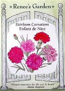 Carnation Seeds Enfant de Nice 250 Seeds
