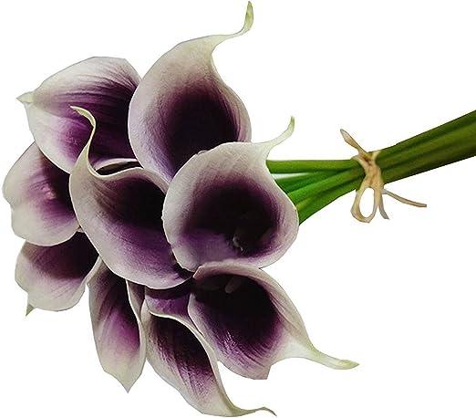 Calla Lily Bulbs 10pcs Home Garden Plant Picasso Calla Lily