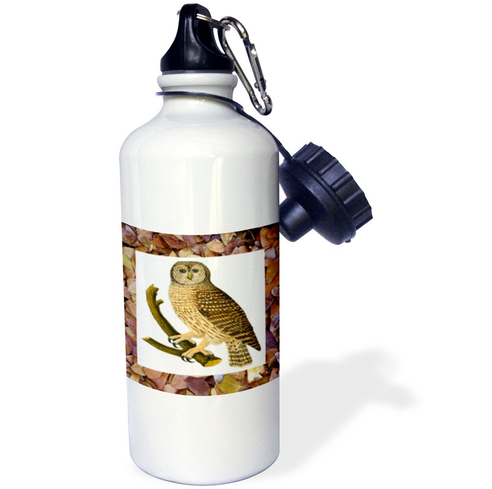 21 oz White 3dRose wb/_34784/_1Owl On Fall Leaves Sports Water Bottle