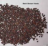 1000 Black Mustard Plant Seed (Brassica Nigra) Edible Leaves,flowers And seeds