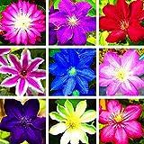 TOPmountain Clematis Flower Seeds 100pcs Climbing Plants Seeds Beautiful Mixed Color Garden Supplies Easy To Grow