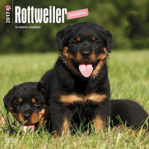 Rottweiler Puppies 2017 Wall Calendar