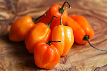 Image result for habanero pepper