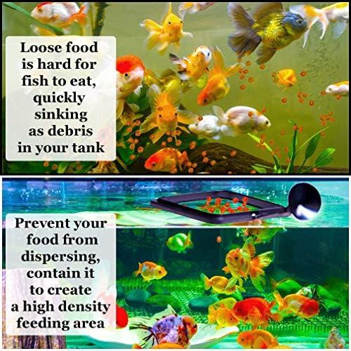 Anillo de alimentación Betta práctico cuadrado flotante para alimentos peces dorados y otros peces más pequeños 3