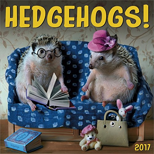 Hedgehogs 2017 Calendar12 x 12 Inches