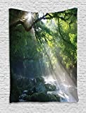 Rainforest Decorations Tapestry By Ambesonne, Stream in The Jungle Stones Under Shadows Of Trees Sunlight Mother Earth Theme, Bedroom Living Room Dorm Decor, 40Wx60L Inches, Green White offers