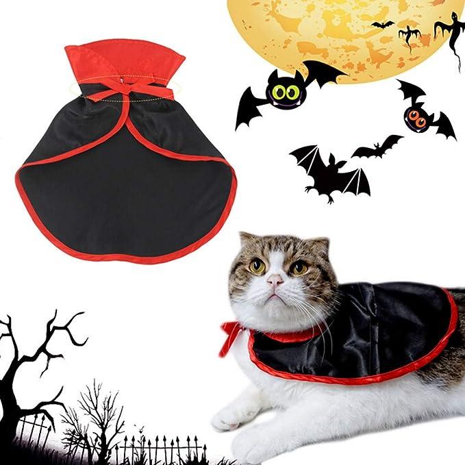 QinMM - Disfraz de araña para Halloween, Perro, Gato, Disfraz de ...