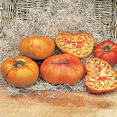 Tomato Old German - Heirloom - Tomato Seed ()