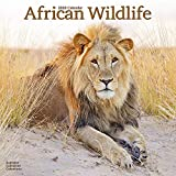 Wildlife Calendar - Tiger Calendar - Lion Calendar - Elephant Calendar - Monkey Calendar - Calendars 2019 - 2020 Wall Calendars - Animal Calendar - African Wildlife 16 Month Wall Calendar by Avonside
