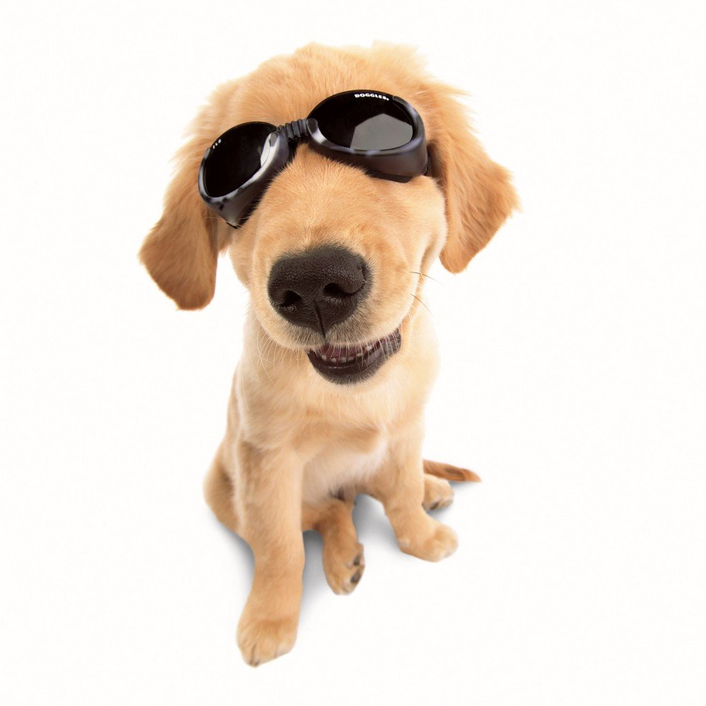 Doggles Stylish Portable Dog UV Protection sunglassIls Extra Small Leopard / Smoke Lens