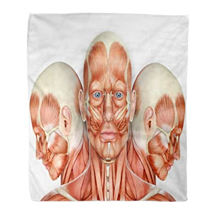 Golee Throw Blanket Facial 3D Male Face Muscles Anatomy Side Views Head  Neck 50x60 Inches Warm Fuzzy Soft Blanket for Bed Sofa