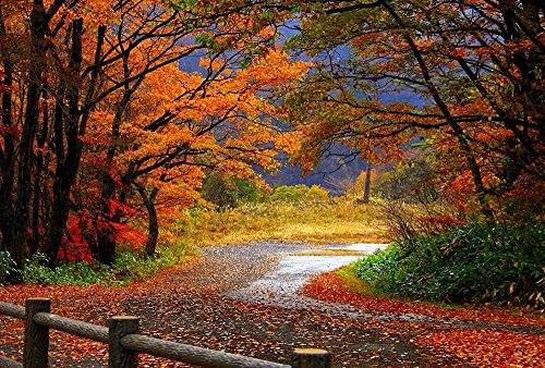 Autumn Forest Road And Fence Art Print Canvas Poster,Home Wall Decor(24x36 - Fence Canvas