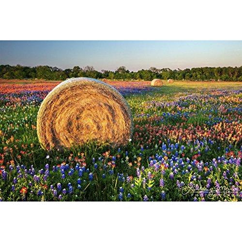 5x7 Texas Wildflower Photo,