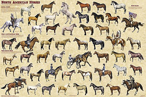 North American Horses Educational Reference Equine Chart Print Poster 24x36