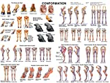 Equine Conformation Chart Horse