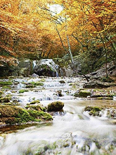 Artland Qualitätsbilder I Glasbilder Deko Bilder Irochka Herbstlicher Wasserfall Landschaften Gewässer Wasserfall Fotografie Ocker 80 x 60 x 1,1 cm A6LH