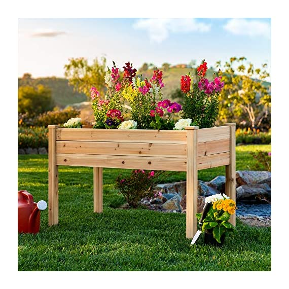 Best Choice Products 46x22x30in Raised Wood Planter Garden Bed Box Stand for Backyard, Patio - Natural 2 SPACIOUS GARDENING BED: Designed with a nearly-4-foot-long bed deep enough to ensure your plants can breathe and grow healthy DURABLE COMPOSITION: Made of 0.75-inch-thick, weather-resistant Cedar wood, this bed is built to last through the seasons ERGONOMIC STRUCTURE: Stands 30 inches tall, making it perfect for those who struggle to bend down or lean over while gardening