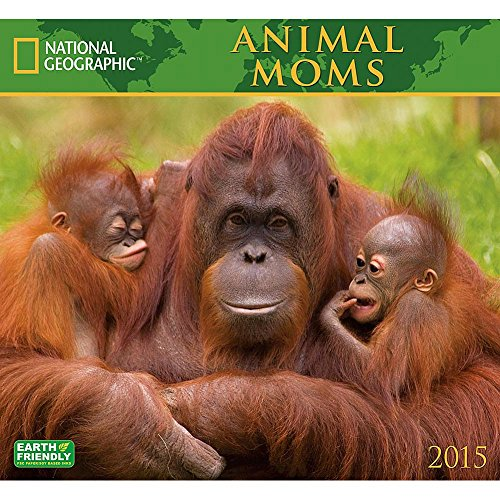 Animal Moms National Geographic 2015 Wall Calendar