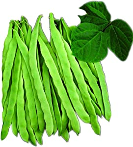Park Seed Algarve French Climbing Bean Seeds, Includes 100 Seeds in a Pack