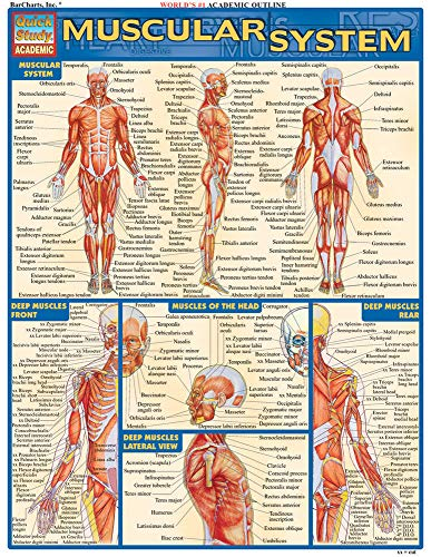Muscular System (Quick Study Academic) (Massage Hand Chart)