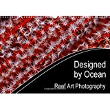 Designed by Ocean Reef Art Photography 2016: Mother Nature is the Most Creative Artist. Especially Underwater, in the Reefs of the Oceans, She ... Art. it is Reef Art. (Calvendo Nature) by Henry Jager (2015-08-25)