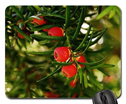 amazon com mouse pads european yew taxus baccata food plant