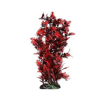 Tandou - Plantas de Acuario Rojas con Musgo Vivo con Base Estable ...