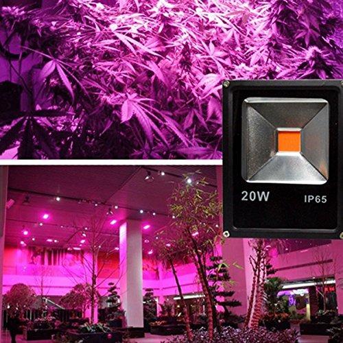 Wuchance 20W 30W 50W volle Spektrum Spektrum Spektrum COB LED wachsen Pflanzenwasser Flutlicht wasserdicht für Gemüse Blaume AC85-265V (Farbe   50w) B07KJH1VGV | Sonderangebot  4a4c1c