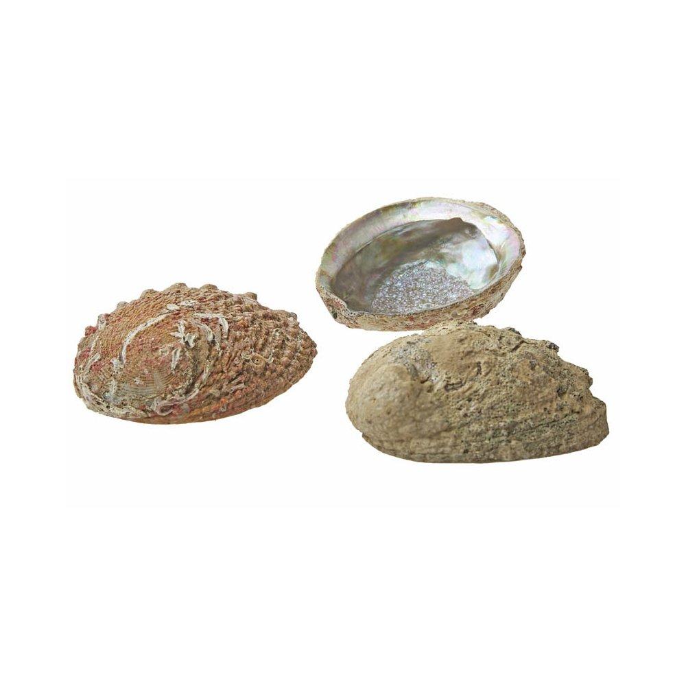 Abalone Mama Cocha Smudge Shell 4