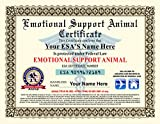 Emotional Support Animal Certificate - Customizable with pets / handlers name