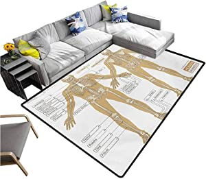 """Human Anatomy Carpet Diagram of Human Skeleton System with Titled Main Parts of Body Joints Picture Non-Slip Doormat Carpet White Tan (5'7""""x6'6"""")"""