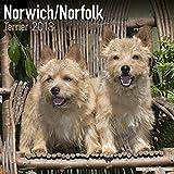 Norwich/Norfolk Terrier Calendar - Dog Breed Calendars - 2017 - 2018 wall Calendars - 16 Month by Avonside