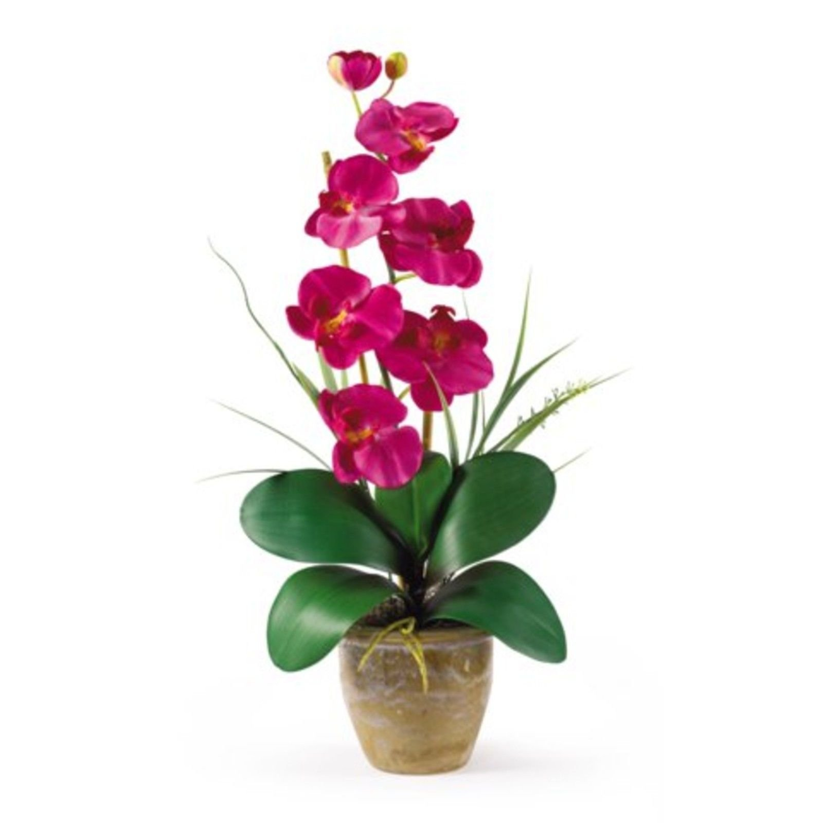 GHP 21''Hx9''Wx6''D Natural Looking Beauty Single Stem Phalaenopsis Silk Orchid